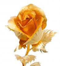 Золотая роза купить в Петербурге